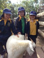 Lower 1st excursion to Featherdale Wildlife park - image featherdale1st-class on https://www.johncolet.nsw.edu.au
