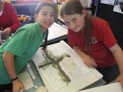 Year 5 gold rush studies - image gold-rush-dioramas-blog on https://www.johncolet.nsw.edu.au