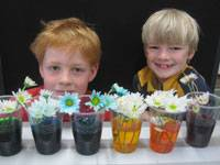 Plant science 101 - image science-experiment-with-flo on https://www.johncolet.nsw.edu.au